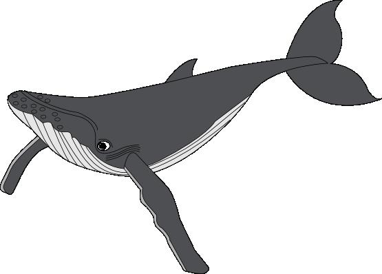 gray whale clip art clipart panda free clipart images rh clipartpanda com humpback whale clipart black and white humpback whale clip art free