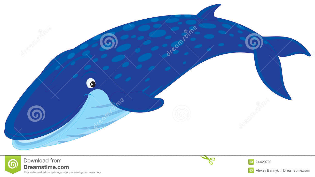 Humpback whale clipart - photo#20