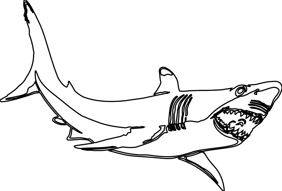 Great White Shark Drawing | Clipart Panda - Free Clipart Images