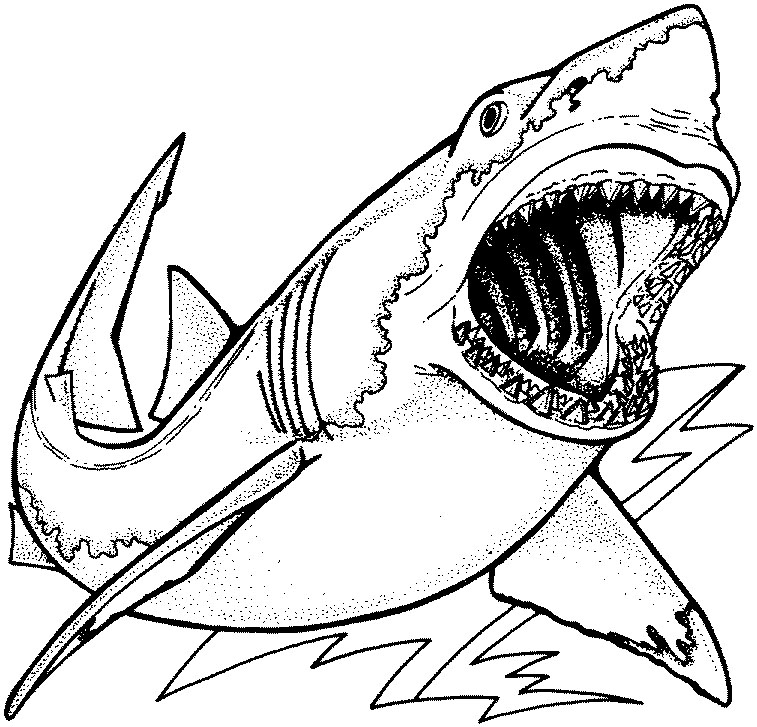 Megalodon Coloring Sheet Coloring Pages Great White Shark Coloring Page