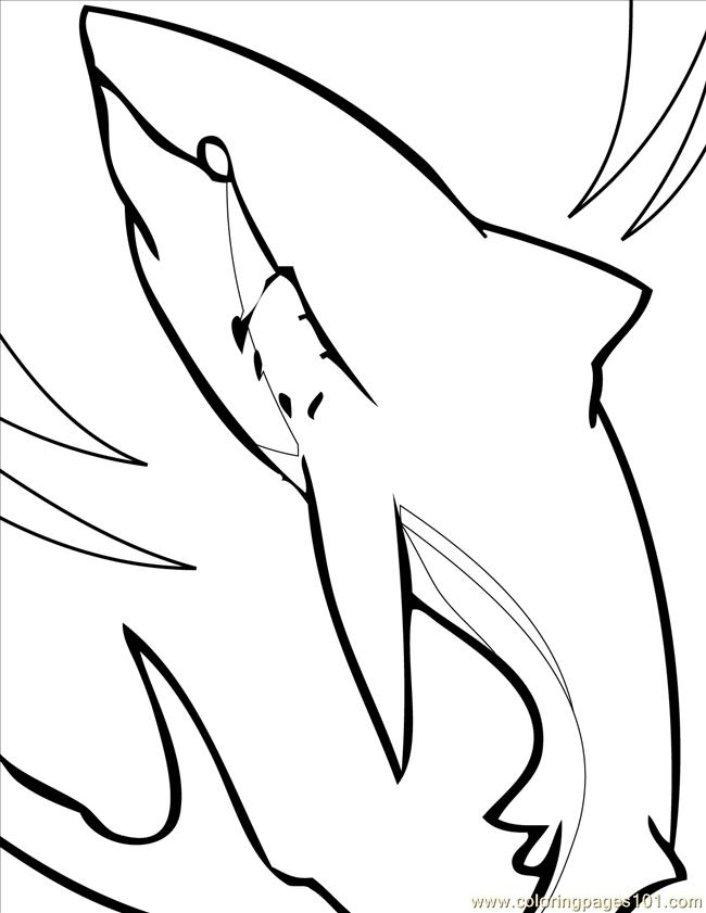 Great White Shark Coloring Pages Clipart Panda Free Clipart Images