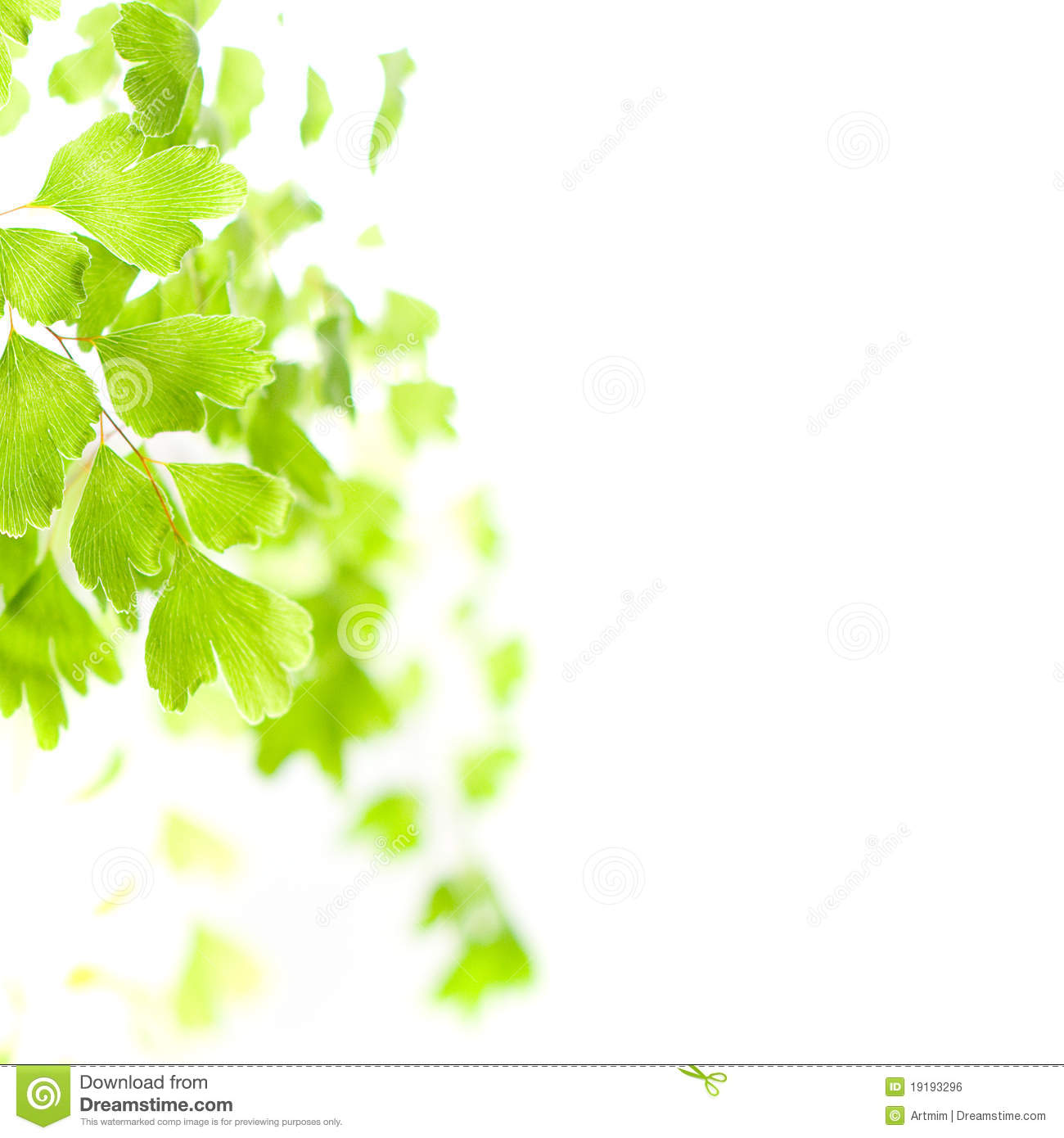 green%20leaves%20images