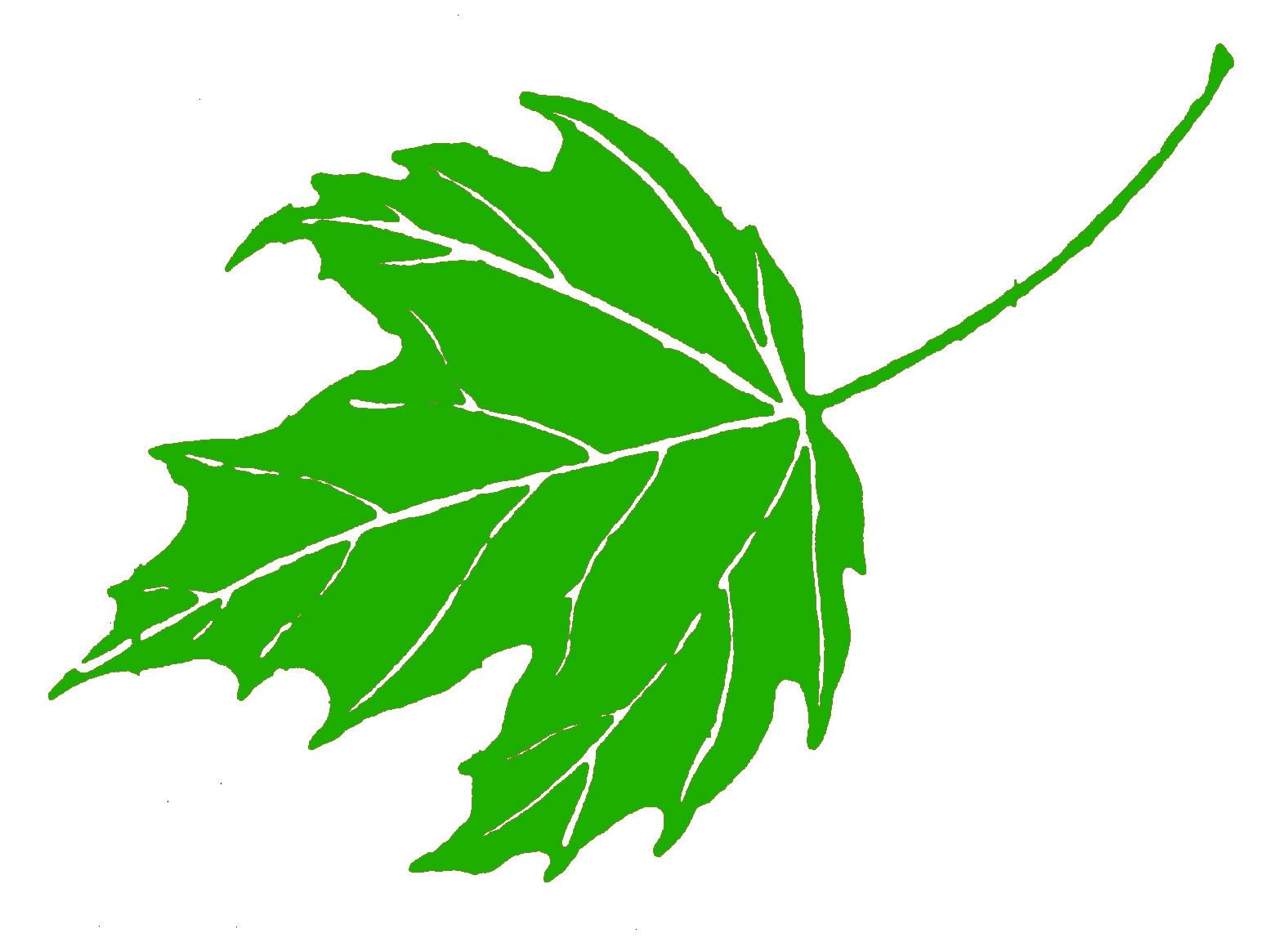 Зеленый лист картинка