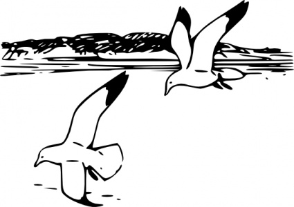 Line Art Clipart : Gull clip art clipart panda free images