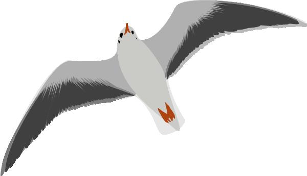Seagull Clip Art Transparent – Cliparts