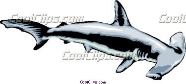 hammerhead-shark-clip-art-hammerhead_shark_CoolClips_anim1383.jpg