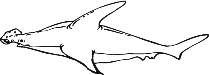 hammerhead shark outline photo19