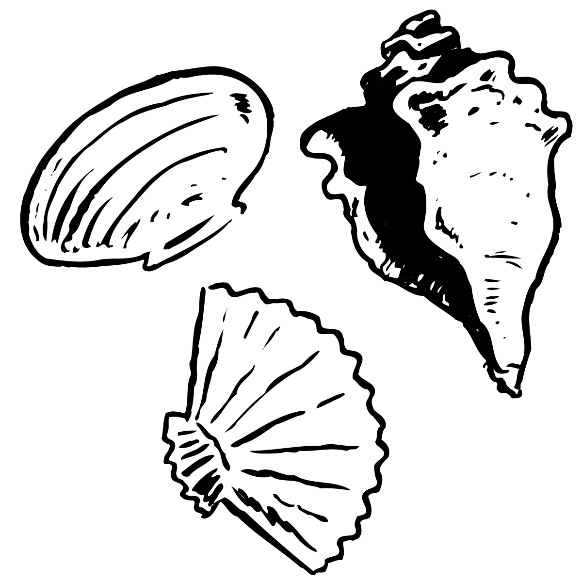 Seashell clipart black and white clipart panda free clipart images