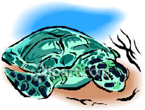 hawaiian%20sea%20turtle%20clipart