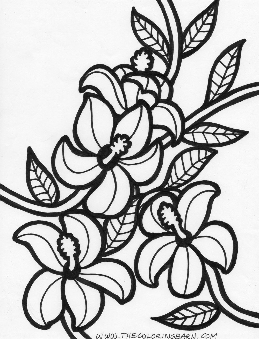 coloring pages of hawaiian flowers - photo#33
