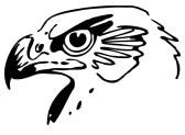 Hawk Clip Art
