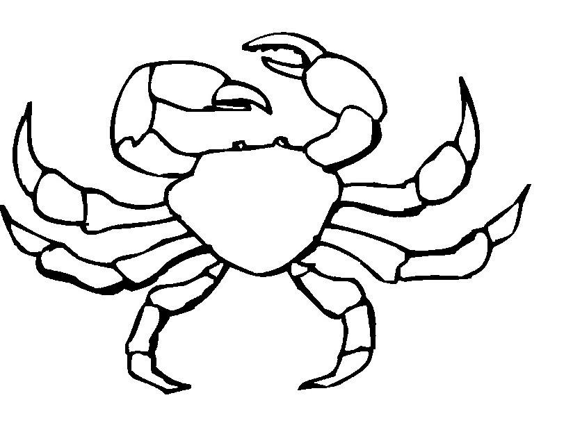 Hermit Crab Coloring Clipart Panda