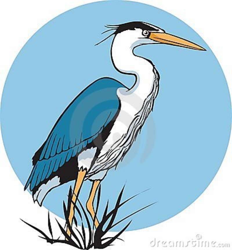 Go Back > Gallery For > Blue Heron Bird Clipart