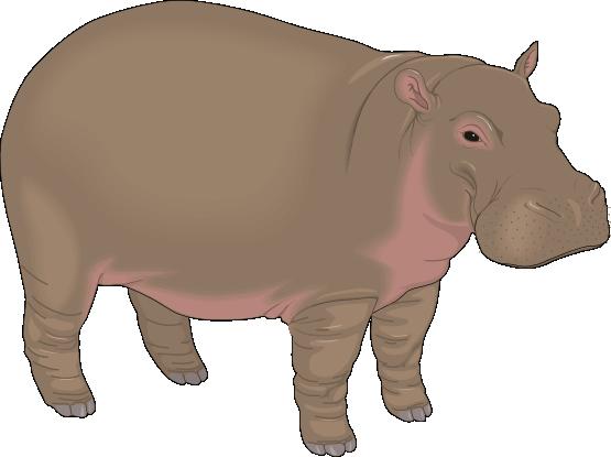 hippopotamus clipart clipart panda free clipart images rh clipartpanda com hippo clipart picture hippo clipart png