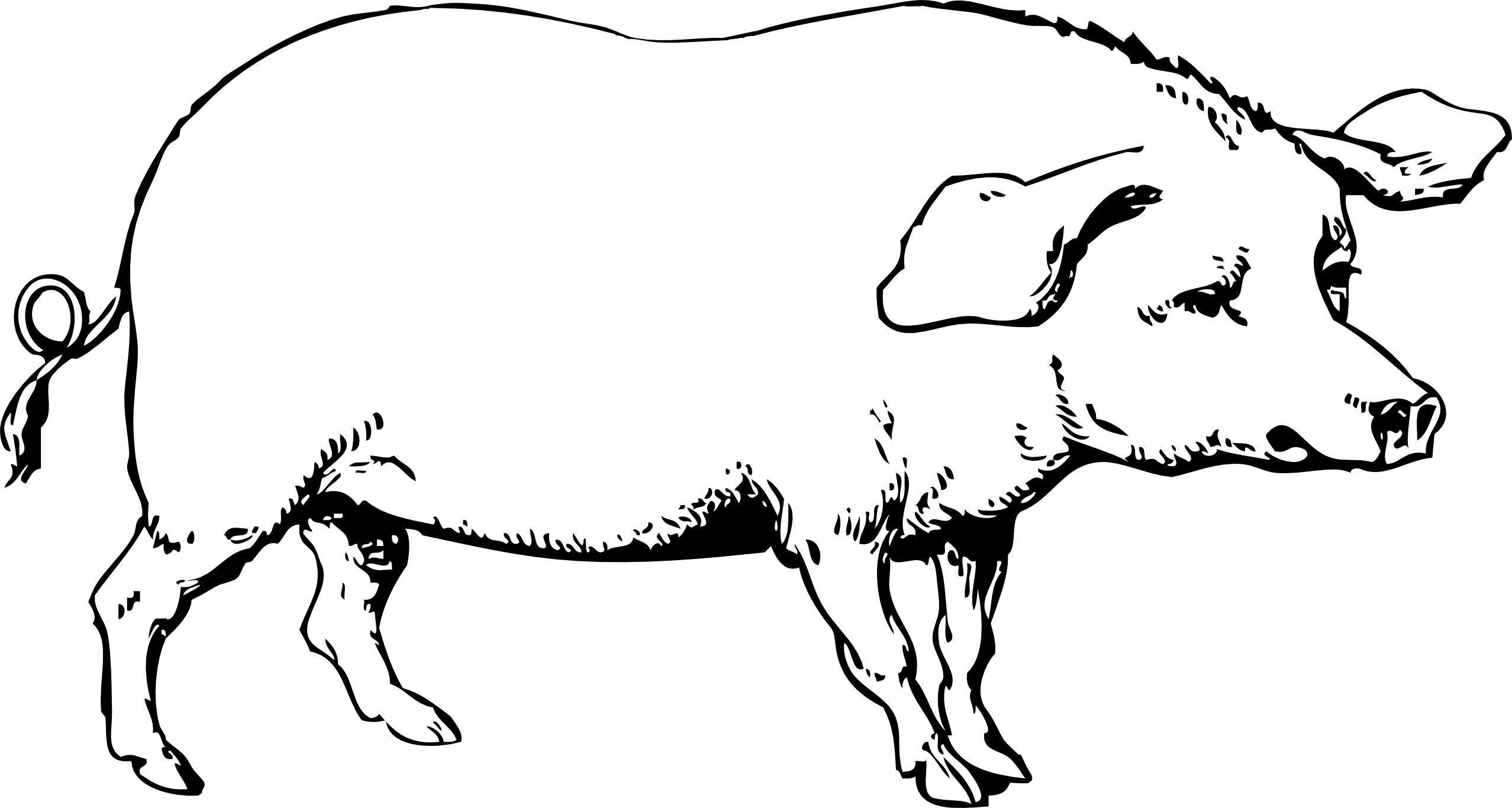 Line Drawing Of A Pig Face : Hog clipart panda free images