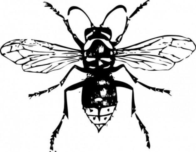 hornet clip art clipart panda free clipart images rh clipartpanda com hornet clipart free hornet clipart images