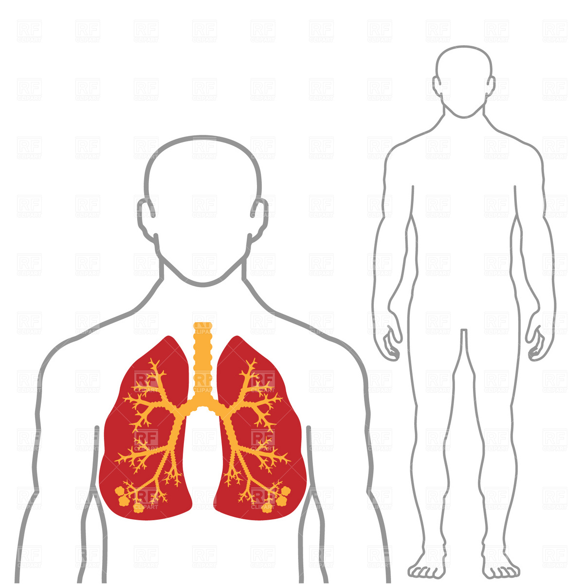 human-body-picture-outline-of-human-body-cells.jpg