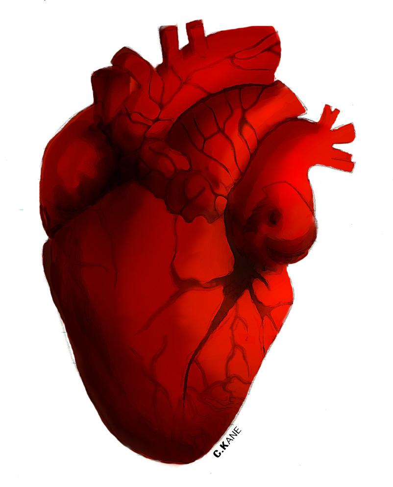 Human Heart Clipart | Clipart Panda - Free Clipart Images