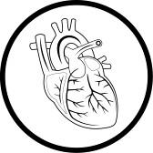 Human Heart Clipart Black And White | Clipart Panda - Free ...