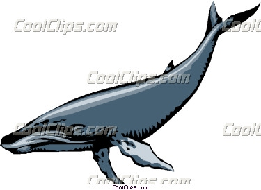 Humpback whale clipart - photo#17