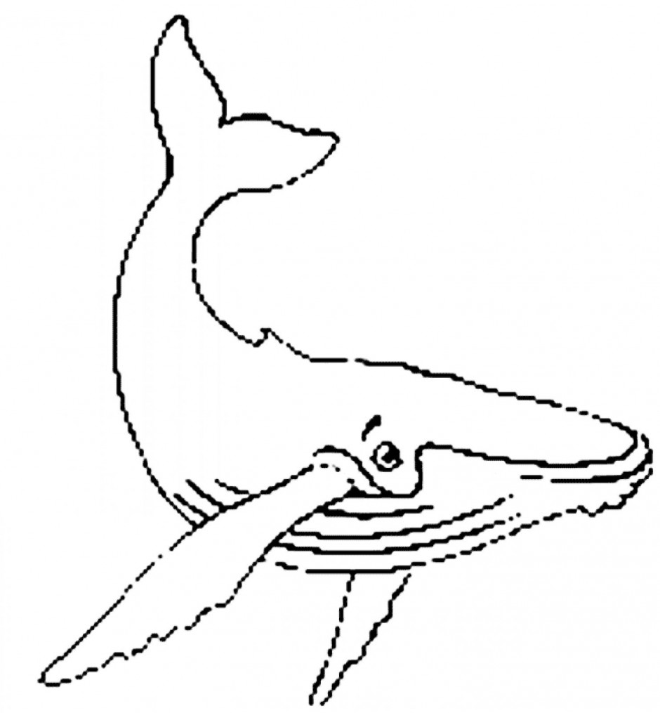 humpback-whale-vector-humpback-whale-coloring-page-Coloring-Pages-for ...