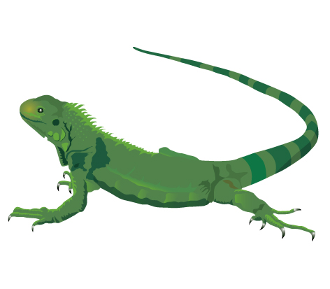 Green Iguana Images  Pixabay  Download Free Pictures