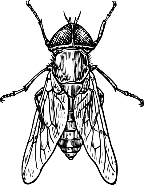 Line Art Def : Insect clipart black and white panda free