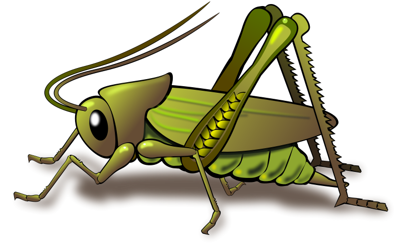 Cricket Insect Clipart | Clipart Panda - Free Clipart Images