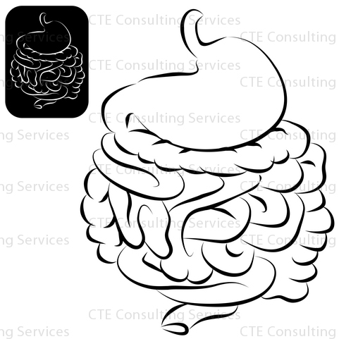 Clipart Stomach also Human Intestines Coloring Page Sketch Templates additionally Diagram Of Human Bowel moreover Fish Intestine Diagram likewise Intestine Clipart Free. on large intestines digestive system diagram