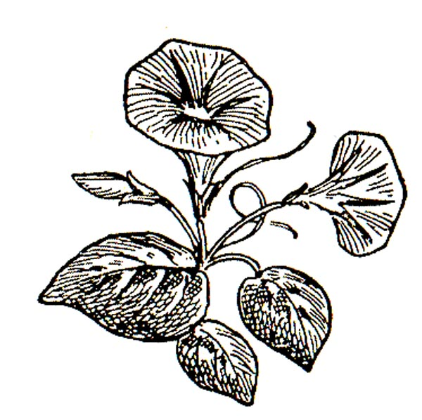 Morning sun clipart black and white jasmine flower clip art