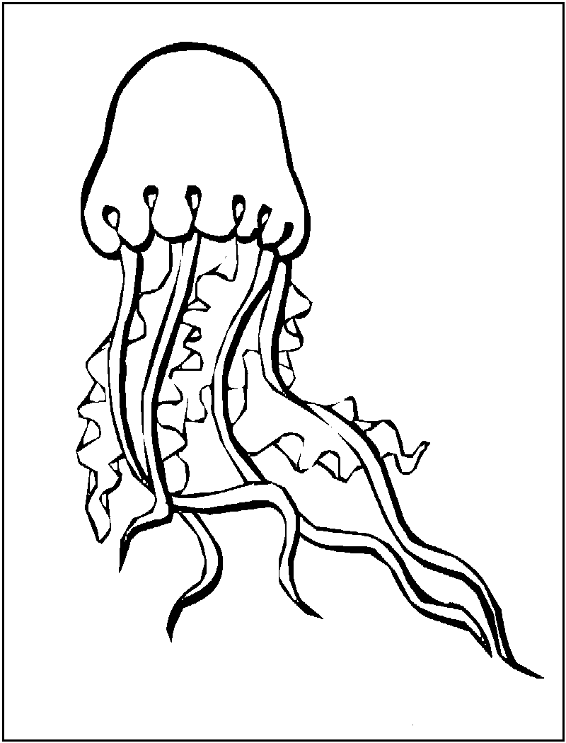 Free Printable Jellyfish Coloring Pages