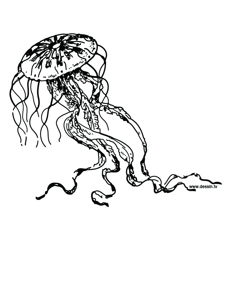 Coloring pages jellyfish - Jellyfish 20coloring 20page