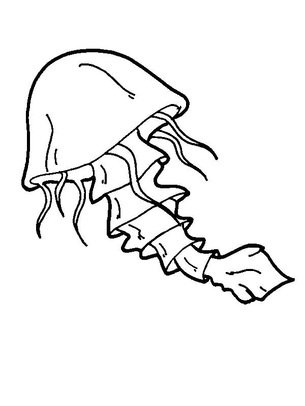 Jellyfish Coloring Page  Clipart Panda  Free Clipart Images