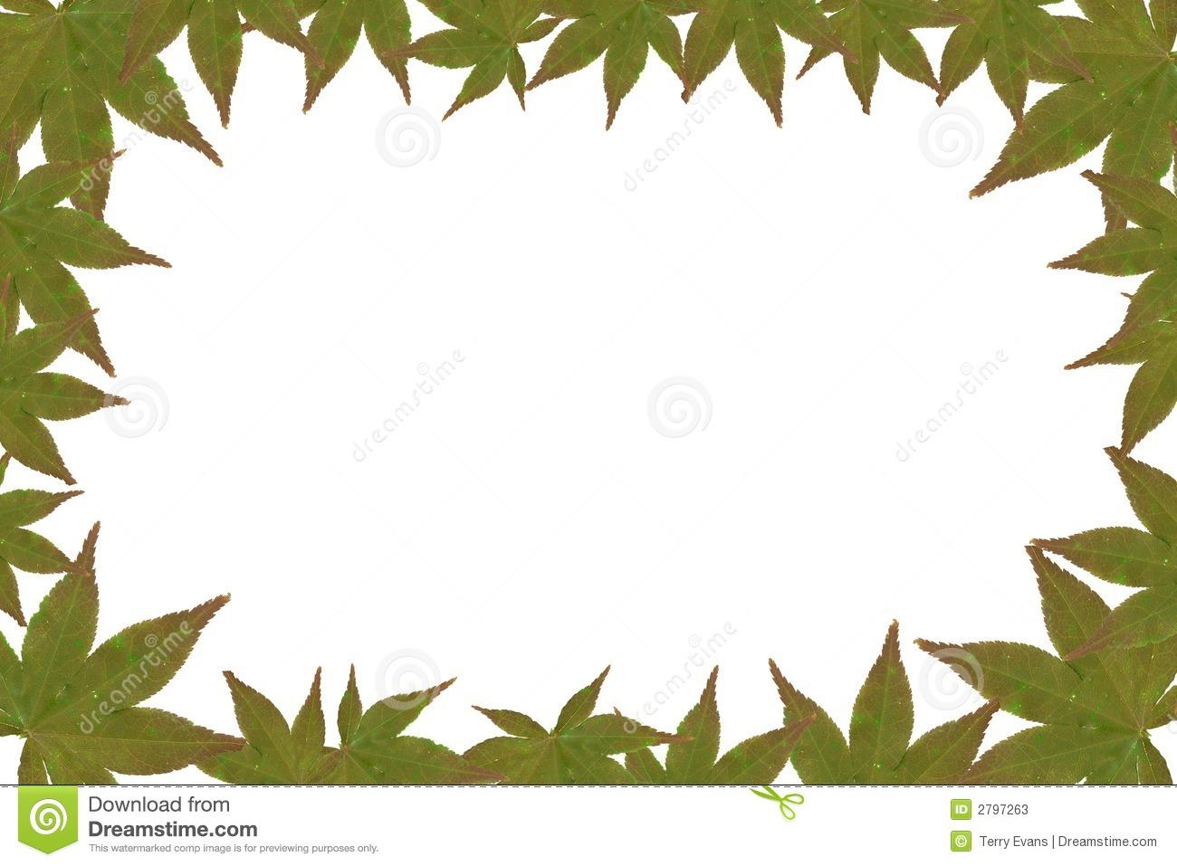 Jungle Leaves B...