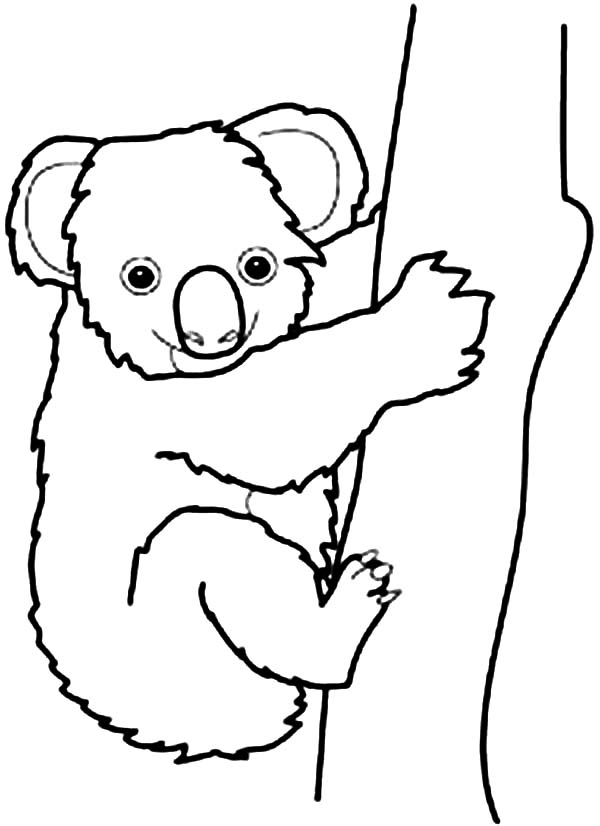 k is for koala bear coloring pages - photo #14