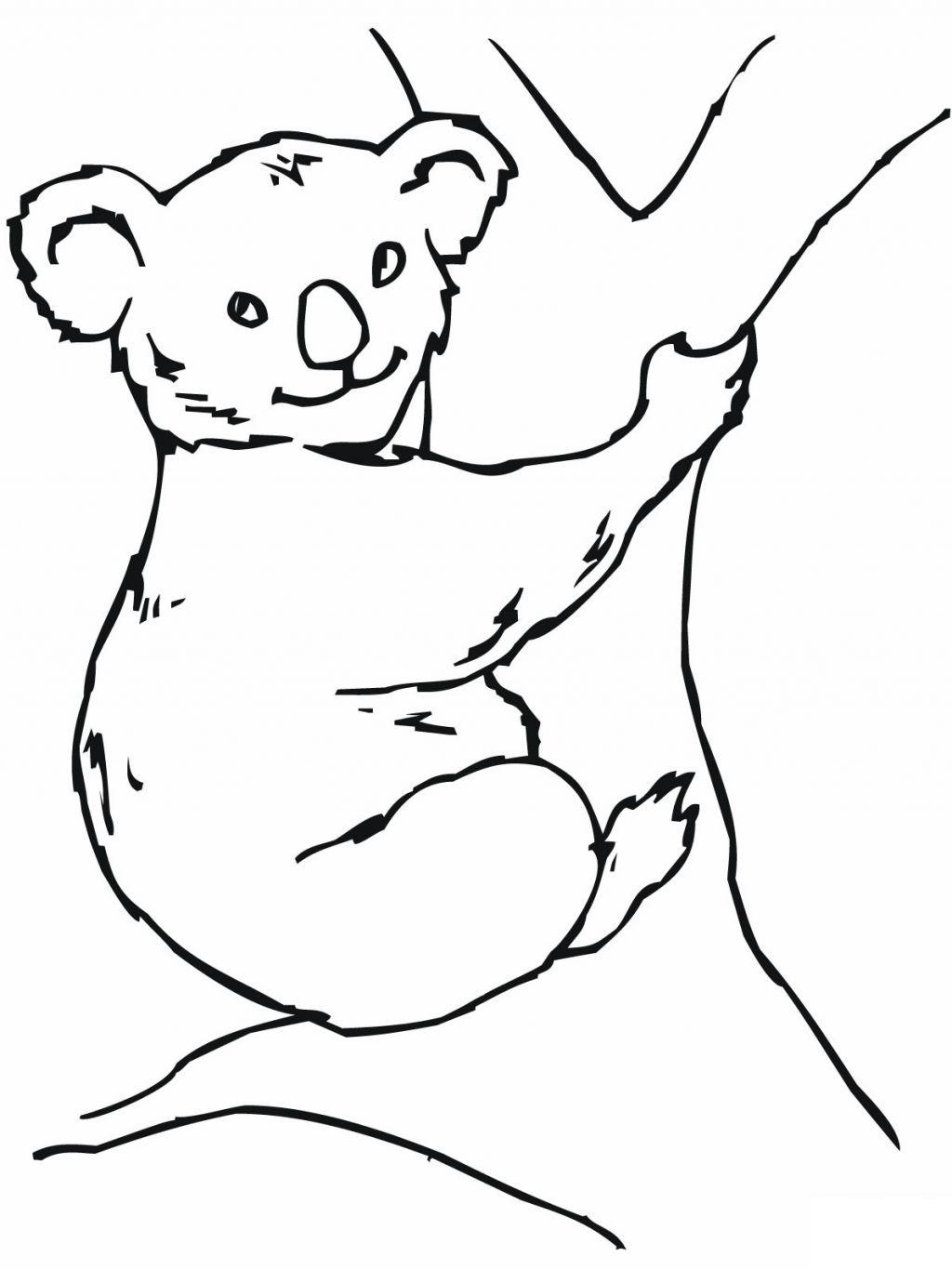 Line Drawing Koala : Koala coloring pages clipart panda free images