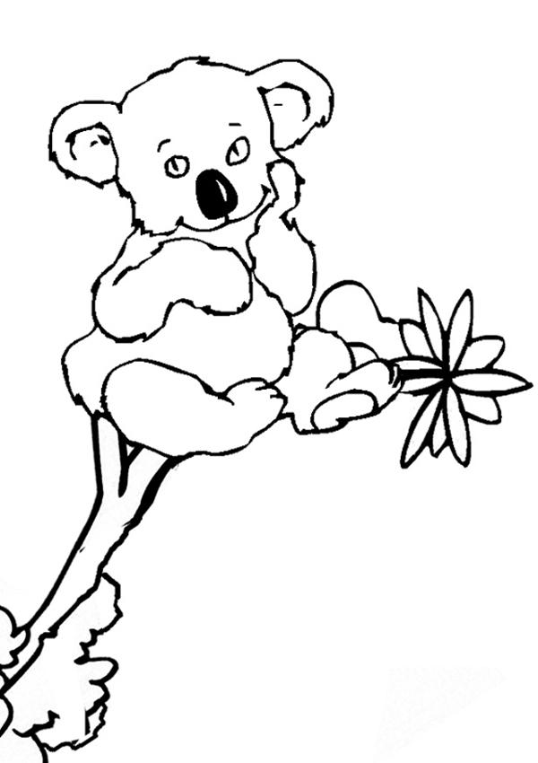 Koala Coloring Pages Clipart Panda