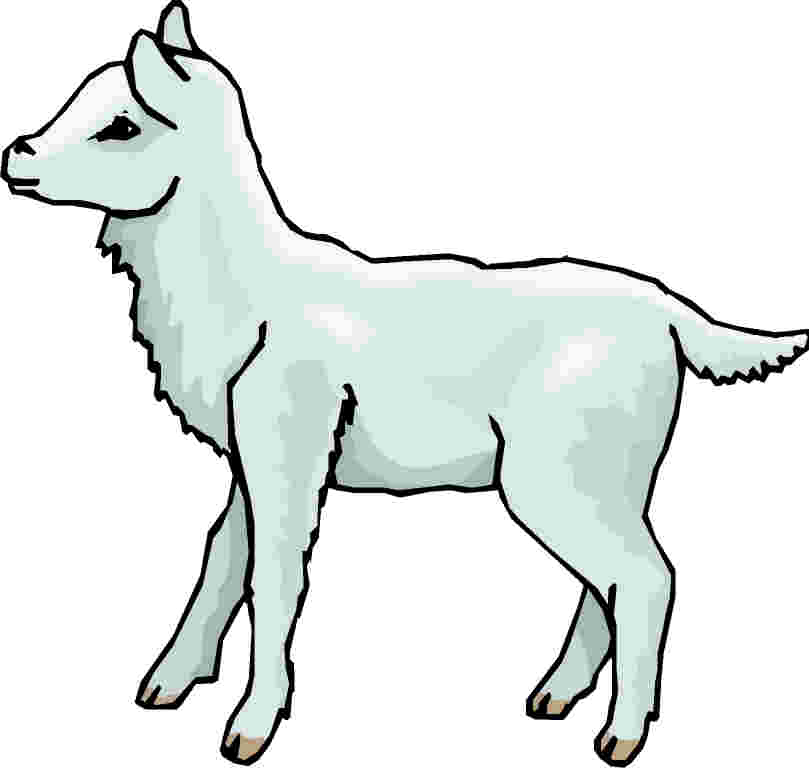Superb Lamb Clipart