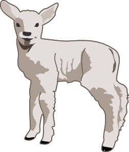 Beautiful Lamb Clipart