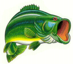 clipart animals bass fish clipart panda free clipart images rh clipartpanda com Largemouth Bass Decals Largemouth Bass Drawings Easy