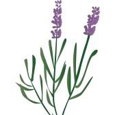 lavender flower clip art free clipart panda free clipart images rh clipartpanda com lavender clipart flowers lavender clip art border free
