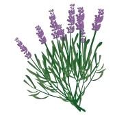 lavender flower clip art free clipart panda free clipart images rh clipartpanda com free clipart lavender plant free clipart lavender plant