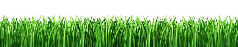 Green Grass Lawn Care Nebraska : Lawn clipart grass green isolated g
