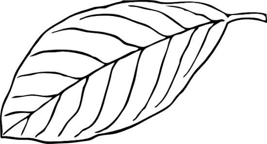 Leaf Clip Art Outline | Clipart Panda - Free Clipart Images