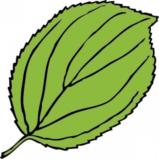Cartoon Leaf Clip Art