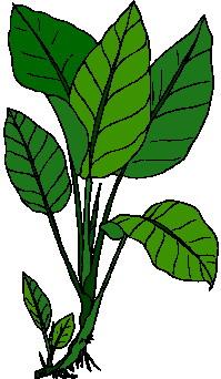 leaf clip art free clipart panda free clipart images rh clipartpanda com leaves clip art outline leaves clip art border