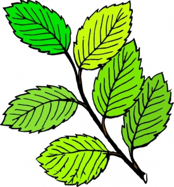leave clipart clipart panda free clipart images rh clipartpanda com leaf clip art fall leaf clip art black and white