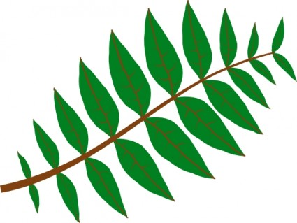 pinnate leaf clip art clipart panda free clipart images rh clipartpanda com free leaves clipart leaves clip art outline