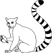 Ring Tailed Lemur Clipart Black And White