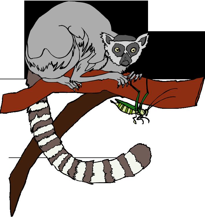 Lemur Clipart